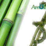 El Bambú de la Suerte 🎋 para la cultura China
