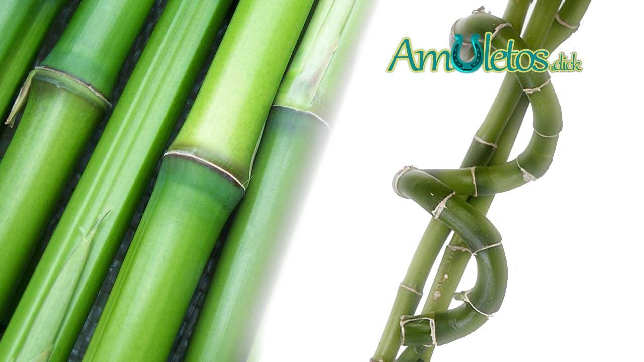 El Bambú de la Suerte