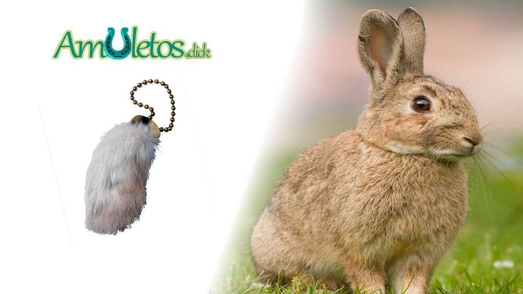 Pata de Conejo de la buena suerte