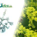 La Planta Ruda y el amuleto Cimaruta 🌿