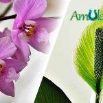 Plantas de la suerte para atraer prosperidad y la energía positiva