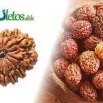 Rudrakshas 📿 El fruto del Nepal