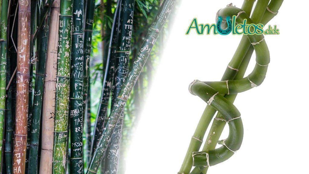 Simbolismo del número de tallos del Bambú en China